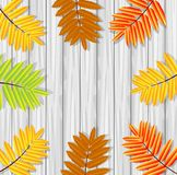 Background for a design with the autumn leaves of wild ash Stock Photography