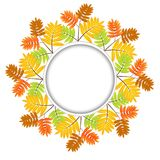 Background for a design with the autumn leaves of wild ash Stock Images
