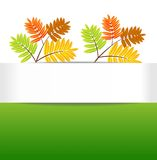 Background for a design with the autumn leaves of wild ash Royalty Free Stock Images