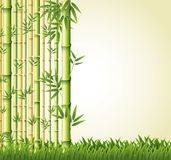 Background design with bamboo forest Stock Photography