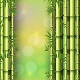 Background design with bamboo forest. Illustration Stock Photo