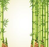 Background design with bamboo stems Stock Images