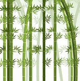 Background design with bamboo trees. Illustration Stock Photography