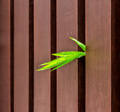 The background design with bamboo and wood. Royalty Free Stock Image