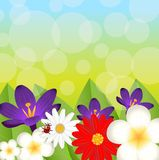 Background for a design with beautiful flowers Stock Images