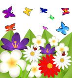 Background for a design with beautiful flowers Royalty Free Stock Photo