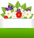 Background for a design with beautiful flowers Stock Image