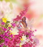 Background for design with flowers, beautiful bouquet of flowers with a butterfly. Royalty Free Stock Image