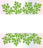 Background for a design with green branches Stock Photos