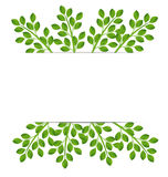 Background for a design with green branches Royalty Free Stock Image