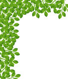 Background for a design with green branches Stock Photo