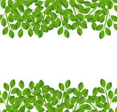 Background for a design with green branches Stock Image