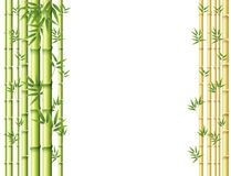 Background design with green and golden bamboo stems Stock Images