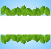 Background for a design with green leaves. Illustration Royalty Free Stock Photography