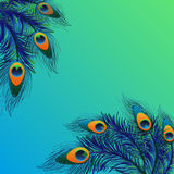 Background design with peacock feathers Stock Photos