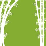 Background design with white bamboo on green. Illustration Stock Photography