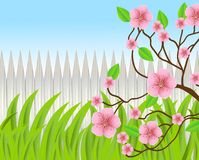Background for a design with a wooden fence and pink flowers Royalty Free Stock Images