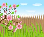 Background for a design with a wooden fence and pink flowers Royalty Free Stock Photography