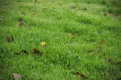 Background of dew drops on bright green grass stock photography