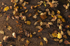 Background of different autumn leaves on the pavement Stock Photo