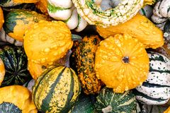 Background of different decorative small pumpkins. Stock Photography