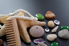 Background with different shells and sea five-pointed stars Royalty Free Stock Photography