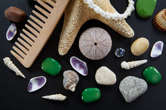 Background with different shells and sea stars Royalty Free Stock Images