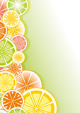Citruses Royalty Free Stock Image