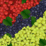 Background of the different types of grapes Royalty Free Stock Photo