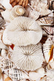 Background of from different types of sea shells Stock Photo