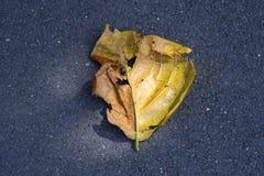 Background on a dirty black asphalt yellow autumn leaf Royalty Free Stock Photos