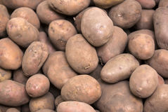 Background of dirty potatoes Royalty Free Stock Image