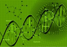 Background with DNA. Background with the model and the formulas of DNA Stock Images