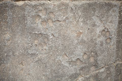 Background, Dog footprint on concrete Royalty Free Stock Photography