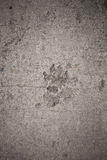 Background, Dog footprint on concrete Royalty Free Stock Photo