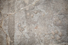 Background, Dog footprint on concrete Stock Images