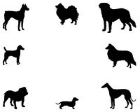 Background with dogs Royalty Free Stock Image