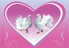 Background dove Royalty Free Stock Images