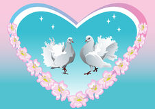 Background dove Stock Photography