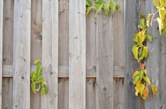 Wooden background, bright colors royalty free stock photography