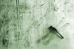 Background with dragonfly Royalty Free Stock Photo
