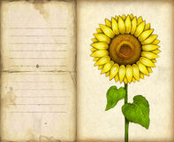 Background with drawing of sunflower Stock Images