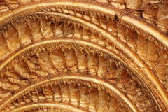 Background of dried banana tree trunk Stock Photography