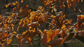 Background with dried brown leaves Royalty Free Stock Photo