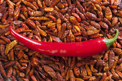 Background of dried chili peppers Stock Photo