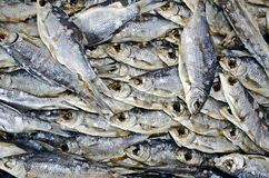 Background of dried fish Royalty Free Stock Image