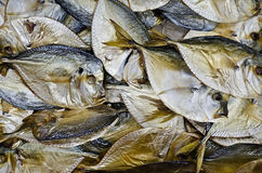 Background of dried fish Stock Image