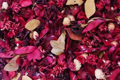 Background: Dried Flowers. Dried flowers and leaves  for background Stock Image