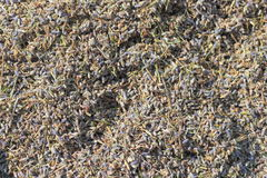 Background of dried lavender Royalty Free Stock Photography