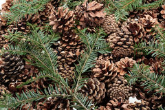 Background  of dried natural pine cones. Royalty Free Stock Photo